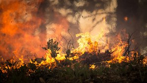 forest-fire-2268729_news.jpg
